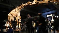 Le plus gros animal ayant jamais marché sur terre a enfin un