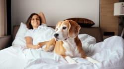 Las mujeres duermen mejor con un perro que con su