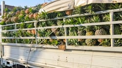 Pineapples Offer Huge Opportunity In Eastern