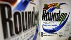 Le glyphosate «Roundup» de Monsanto est sans danger, réitère Santé