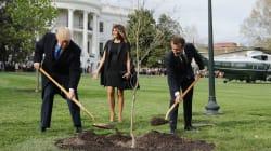 Donald Trump es troleado en Twitter por la plantación de un