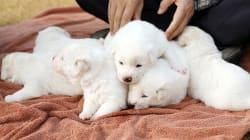 Ces chiots sont un symbole fort (et adorable) du rapprochement des deux