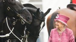 Con le corse dei cavalli (di sua proprietà) la regina Elisabetta ha vinto quasi 7.5 milioni di
