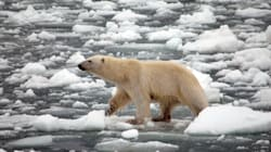UN: Paris Deal Won't Be 'Enough' To Stave Off Worst Effects Of Climate