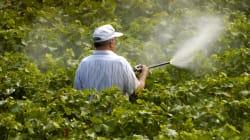 BLOG - La pollution aux pesticides touche d'abord les viticulteurs et les riverains avant de menacer les