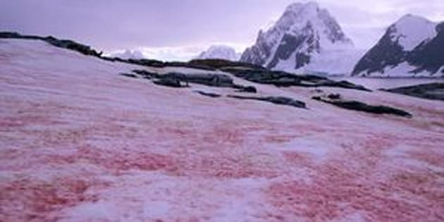 Petermann Island, Antarctica, Antarctica