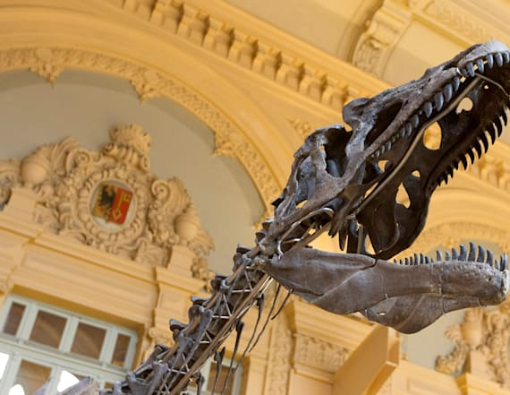 Mystery dinosaur skeleton to be auctioned