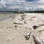 L'état d'urgence décrété en Floride en raison d'une «marée rouge»