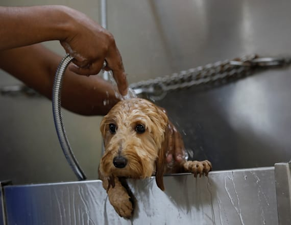India's pampered pets get clean air amid smog crisis