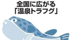 海がない栃木でトラフグの養殖が盛ん。その秘密とは?