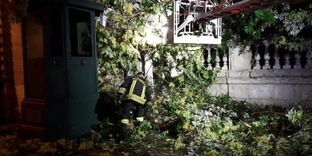 Ogni temporale fa strage di alberi a Roma. Colpita garitta d