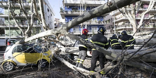 I Vigili del fuoco intervengono in Via Manlio Gelsomini in seguito alla caduta di un albero, Roma, 17 gennaio 2018. ANSA/ MASSIMO PERCOSSI