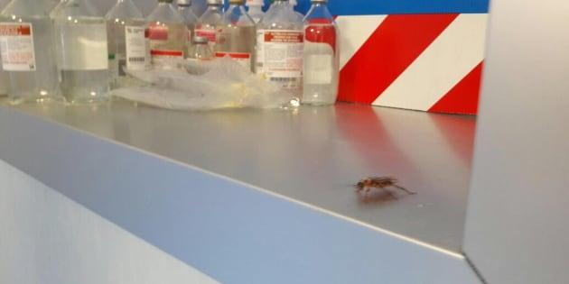 Scarafaggi tra i medicinali dell'ospedale San Giovanni Bosco, al centro di una segnalazione dei Verdi per la presenza di zanzare e scarafaggi, Napoli, 19 giugno 2017.  ANSA/CESARE ABBATE/PER GENTILE CONCESSIONE DEL CONSIGLIERE REGIONALE DEI VERDI FRANCESCO BORRELLI