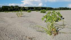 Emergenza siccità, 6 Regioni chiedono lo stato di