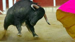Así reacciona un toro la primera vez que pisa la arena de la
