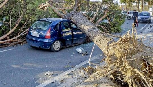 VENTO POLARE SUL CENTROSUD - Cade muro e crollano alberi: 3 vittime nel Lazio. Mercantile turco arenato sul litorale di