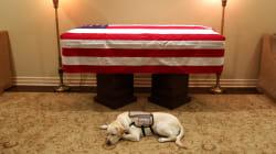 Sully, il labrador di George H. Bush, veglia la bara dell'ex presidente e commuove il