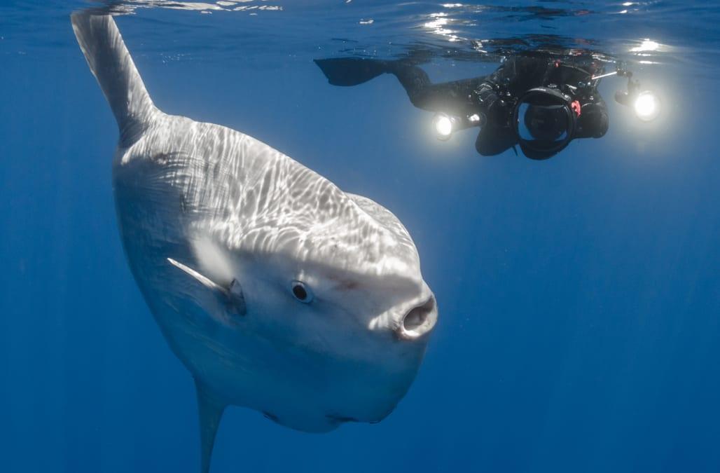 Rare, massive sunfish washes up on California beach, marking