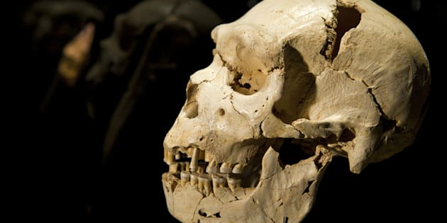 The cranium and mandible of Homo heidelbergensis (500,000 years ago) is seen at the Museum of Human Evolution of Burgos.