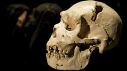 First Human Ancestors Evolved In The Mediterranean, Not In Africa, Claims New