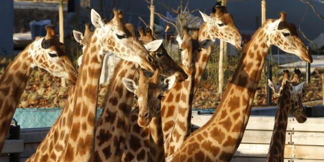 Le zoo de Vincennes, épinglé par la Cour des comptes