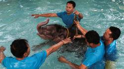Un éléphanteau amputé réapprend à marcher dans une