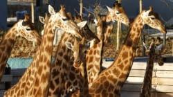 Zoo de Vincennes, Levallois, ordre des dentistes, buralistes... Les 9 bonnets d'âne distribués par la Cour des