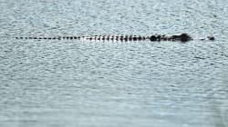 350 alligators pourraient s'échapper dans les rues de