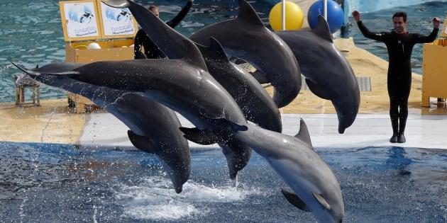 Marineland ne veut vraiment pas arrêter la reproduction de dauphins en captivité