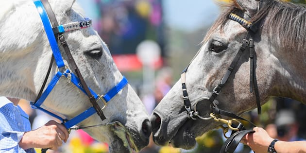 This pic is the best. It's a horse called Tribal Wisdom (left), the winner of the race named after Subzero, nuzzling Subbie (left). Aaaawwww.