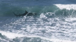 Another Shark Attack On NSW North