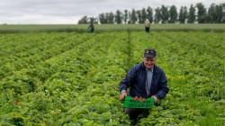 Por que a agricultura é peça chave no sequestro de