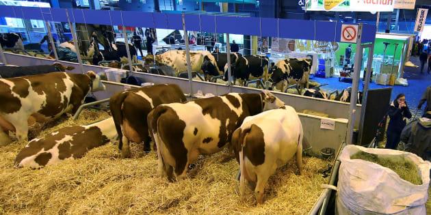 À quand un salon de l'agriculture axé sur le bien-être animal?
