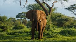We Might Be The Last Generation To See Elephants Like