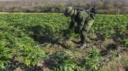 El combate al narco como derecho