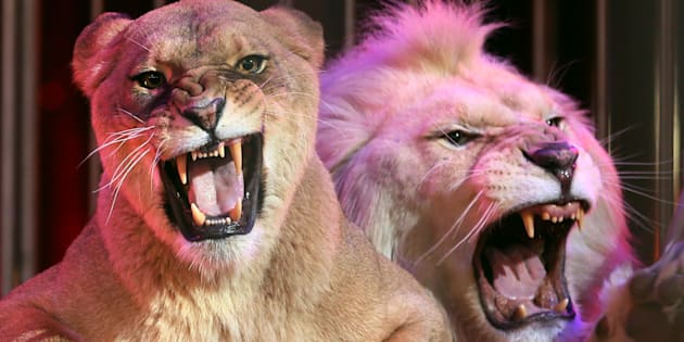 L'Irlande et l'Italie interdisent l'emploi d'animaux sauvages dans les cirques (autorisé en France)
