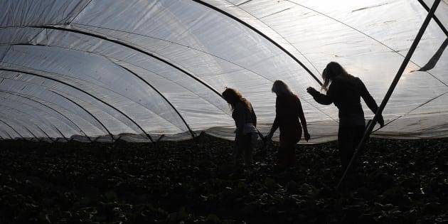 Un grupo de trabajadoras temporeras de la fresa de Huelva, en la campaña de 2009.
