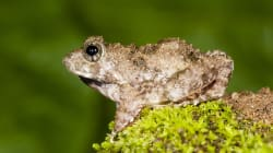 The Discovery Of Four New Frog Species Confirms Western Ghats Region As A Global Biodiversity