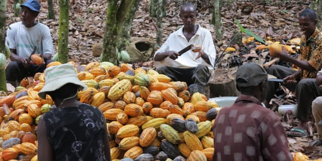 Cocoa farmers have moved into parks and reserves.