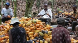 New Research Suggests Cocoa Trade Fueling Climate