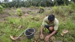 小規模農家によるパーム油生産の改善支援活動