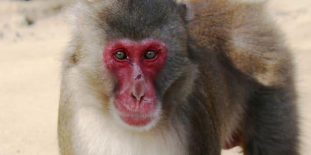高崎山自然動物園の猿