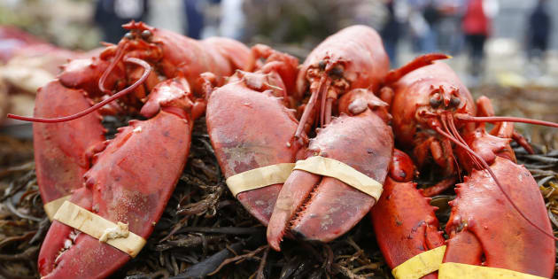 Un homard sous cannabis avant d'être cuit