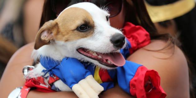 Ministro do STJ ressaltou ainda que não se trata de uma questão de humanizar o animal e que não se pode buscar a equiparação da posse de animais com a guarda de filhos.