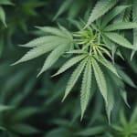 L'interdiction de fumer du cannabis ne peut être ajoutée dans un