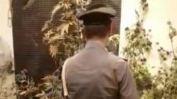 Carabinieri vanno a sedare una lite famigliare e scoprono 70 piante di