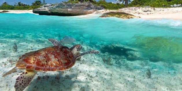C 39 il coprifuoco per tutelare l 39 accoppiamento delle for Accoppiamento tartarughe
