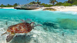 C'è il coprifuoco per tutelare l'accoppiamento delle tartarughe. Passeggeri della Easyjet costretti a rimanere 2 giorni a