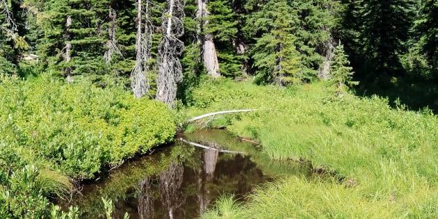 Un riachuelo en el Parque Nacional de Lolo, donde ocurrieron los hechos.
