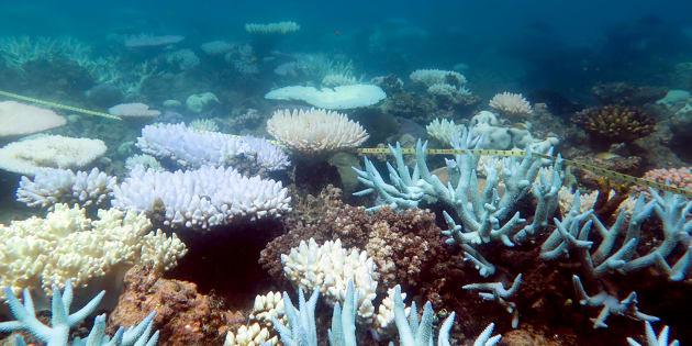 """La Grande barrière de corail, joyau du patrimoine mondial, a subi une hécatombe """"catastrophique"""""""